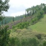 Photos of Beetle Kill Trees Cleared at Steamboat Ski Area